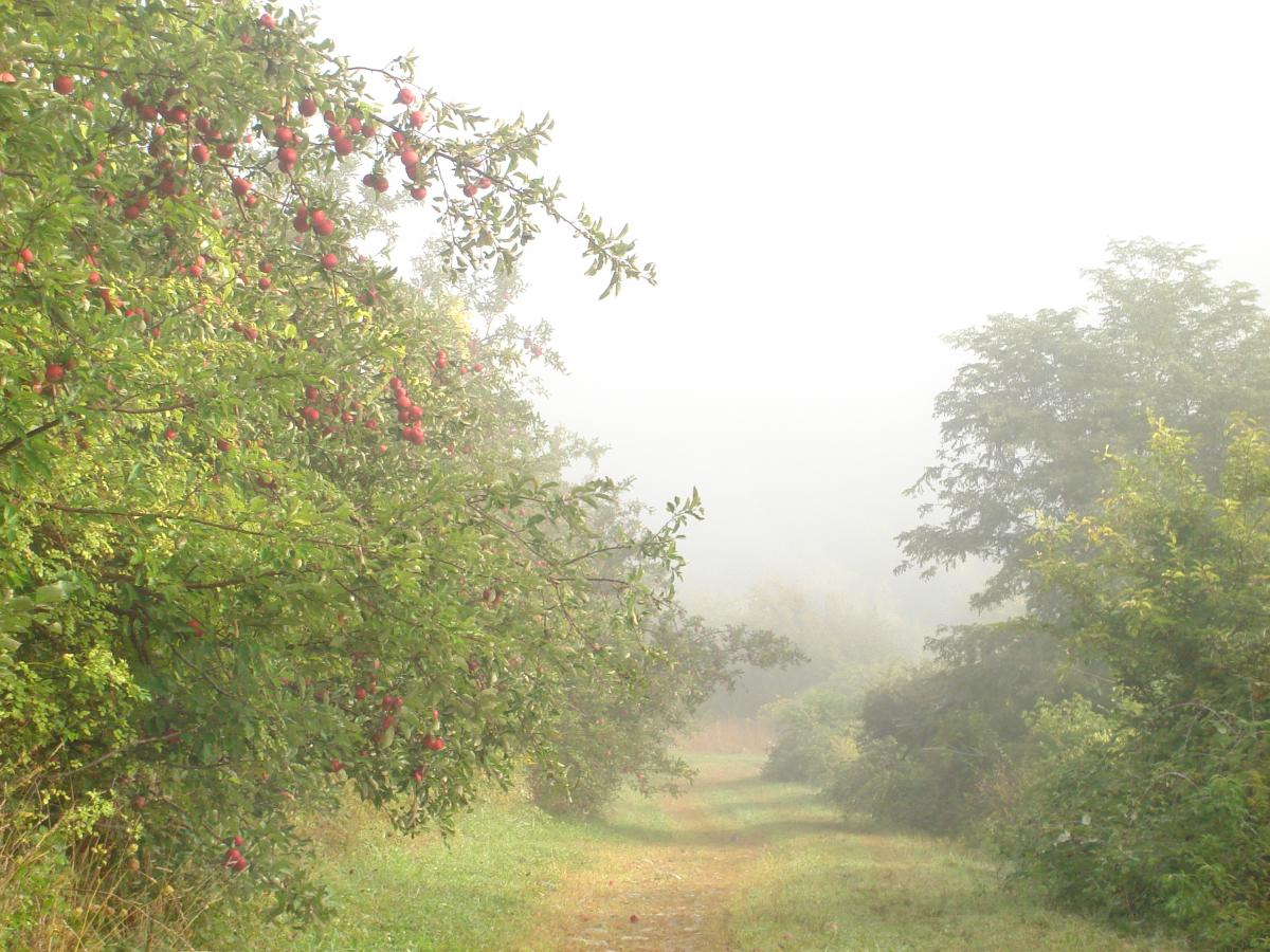 Foggy Peach Hill sunset (Sept/2007)